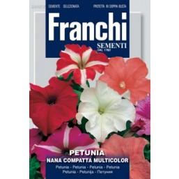 Петуния компактная, смесь (0,5 гр)  VXF 342/2   Franchi Sementi