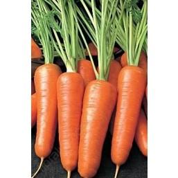 Морковь Каротель 2гр. Агроуспех®