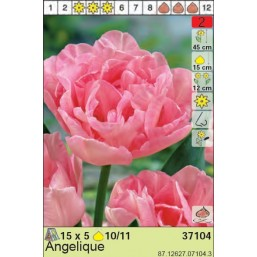 Тюльпаны Angelique (x5) 10/11 (цена за упаковку)