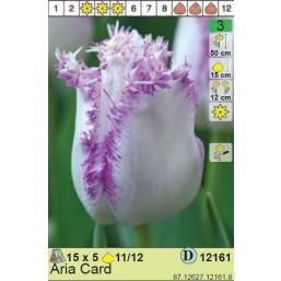 Тюльпаны Aria Card (x5) 11/12 (цена за шт.)