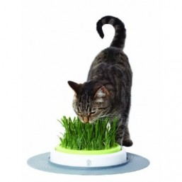 Травка для кошек