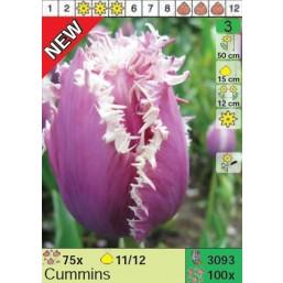 Тюльпаны Cummins (x100) 11/12 (цена за шт.)