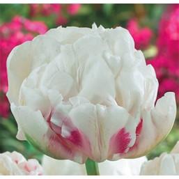 Тюльпаны Ice Wonder