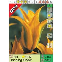 Тюльпаны Dancing Show (x100) 11/12 (цена за шт.)