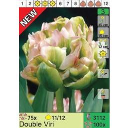 Тюльпаны Double Viri (x100) 11/12 (цена за шт.)