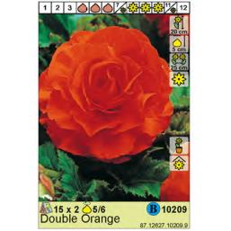 Бегония Double Orange 5/6