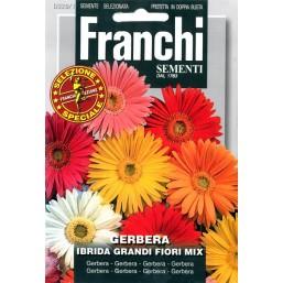 Гербера Ibrida, смесь (0,2 гр) DBFS 328/1   Franchi Sementi