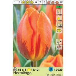 Тюльпаны  Hermitage (x5) 11/12 (цена за шт.)