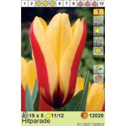 Тюльпаны Hitparade (x100) 11/12 (цена за шт.)