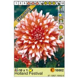 Георгин Holland Festival
