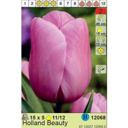Тюльпаны  Holland Beauty (цена за шт.)