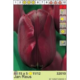 Тюльпаны Jan Reus (x5) 11/12 (цена за шт.)