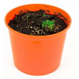 """Клевер """"Азбука растений"""" набор для выращивания BONTILAND (горшочек, питательный субстрат, семена, пластиковая лопатка для рыхления)"""