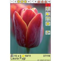Тюльпаны Laura Fygi (x5) 10/11