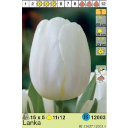 Тюльпаны  Lanka (x5) 11/12 (цена за шт.)