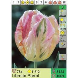 Тюльпаны Libretto Parrot (x100) 11/12 (цена за шт.)
