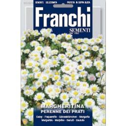 Маргаритка для газона DBF (0,4гр) 336/4   Franchi Sementi