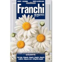 Маргаритка Gigannte VXF 336/1   Franchi Sementi