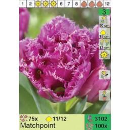 Тюльпаны Matchpoint (x100) 11/12 (цена за шт.)