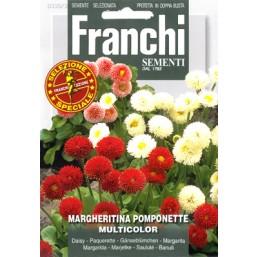 Маргаритка Pomponette, смесь (0,5 гр) DBFS336/3   Franchi Sementi