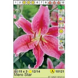 Лилии  Mero Star (x3) 12/14 (цена за шт.)