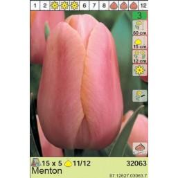Тюльпаны Menton (x5) 11/12 (цена за шт.)