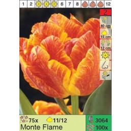 Тюльпаны Monte Flame (x100) 11/12 (цена за шт.)