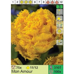 Тюльпаны Mon Amour (x100) 11/12 (цена за шт.)