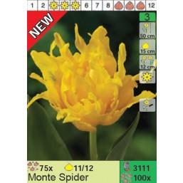 Тюльпаны Monte Spider (x100) 11/12 (цена за шт.)