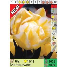Тюльпаны Monte sweet (x100) 11/12 (цена за шт.)