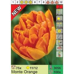 Тюльпаны Monte Orange (x100) 11/12 (цена за шт.)