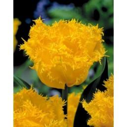 Тюльпаны Mon Amour SUPER