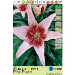 Лилии Pink Pixels (x3) 12/14 (цена за шт.)