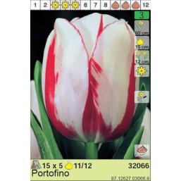 Тюльпаны Portofino (x5) 11/12 (цена за шт.)
