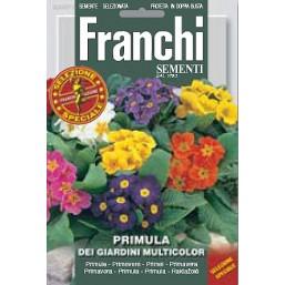 Примула садовая, смесь (0,4 гр) DBFS 347/1   Franchi Sementi