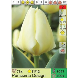 Тюльпаны Purissima Design (x100) 11/12 (цена за шт.)