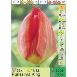 Тюльпаны Purissima King (x100) 11/12 (цена за шт.)