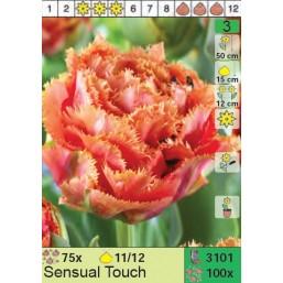 Тюльпаны Sensual Touch (x100) 11/12 (цена за шт.)