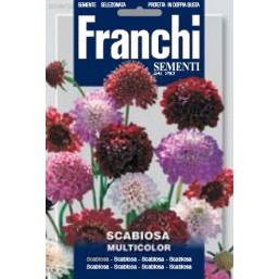 Скабиоза, смесь (1 гр)  DBF 349/30   Franchi Sementi