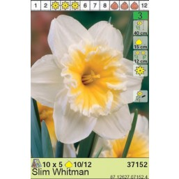 Нарциссы Slim Whitman (x5) 10/12 (цена за упаковку)