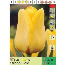 Тюльпаны Strong Gold (x50) 14/+ (цена за шт.)