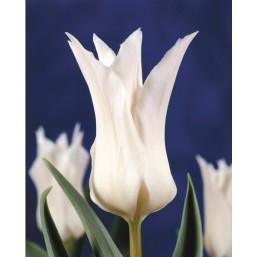 Тюльпаны Tres Chic