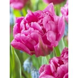 Тюльпаны Dior