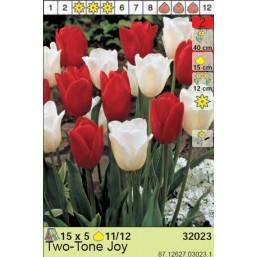 Тюльпаны Two-tone Joy (x5) 11/12 (цена за шт.)