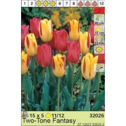 Тюльпаны Two-tone Fantasy (x5) 11/12 (цена за шт.)