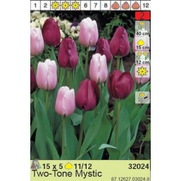 Тюльпаны Two-tone Mystic (x5) 11/12 (цена за шт.)