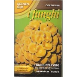 Вешенка рожковидная (100 гр) Fungo Delloro   Franchi Sementi