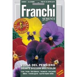 Виола швейцарские гиганты смесь  GIGANTE SVIZZERA MULTICOLOR DBFS 355/4   Franchi Sementi