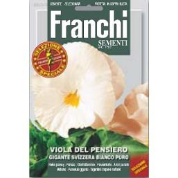 Виола швейцарские гиганты белая GIGANTE SVIZZERA BIANCO DBFS 355/6   Franchi Sementi