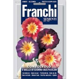 Вьюнок почвопокровный, смесь (5 гр)  VXF 315/1   Franchi Sementi
